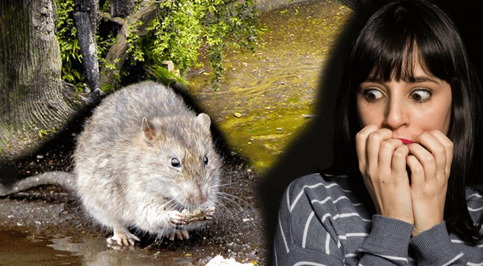 deratizacia-bytovych-domov-potkan